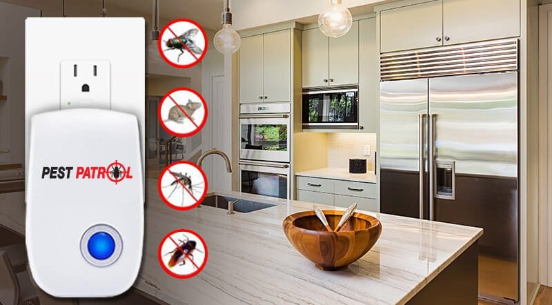 Pest Patrol Can Get Rid Of Bugs And Mice The Safe Way