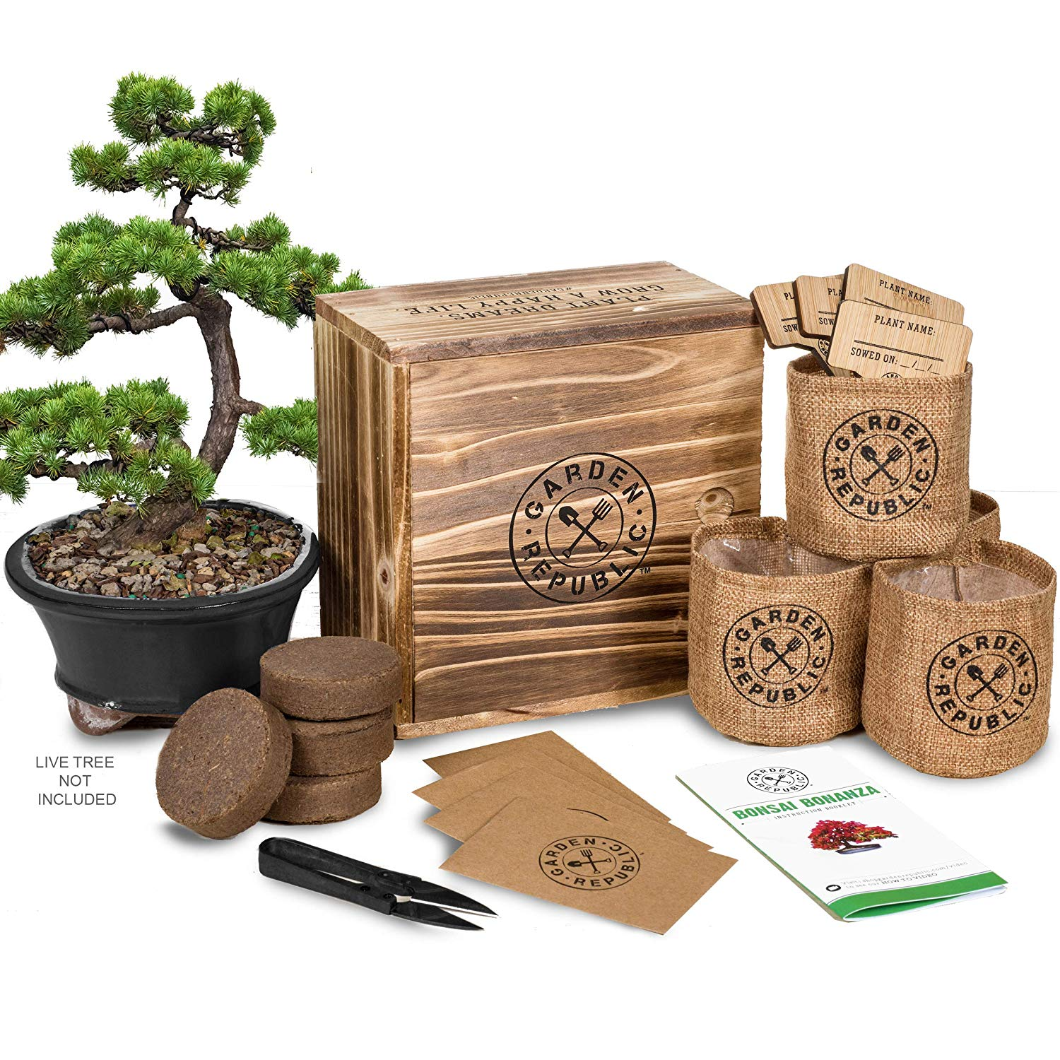 Bonsai tree seed starter kits are great gifts for mom