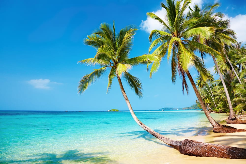 promise to book yourself a tropical trip as part if your new years resolutions