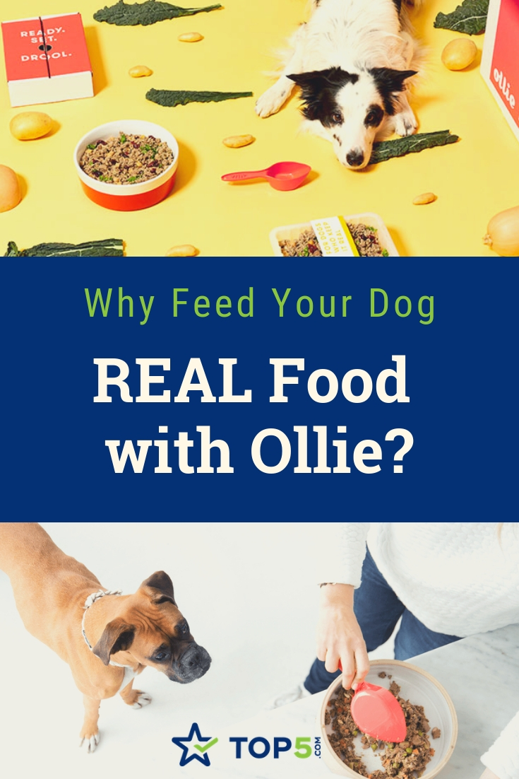 why feed your dog real food with ollie?