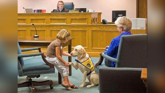 deaf dog story courtroom