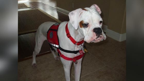 deaf dog story karl in red