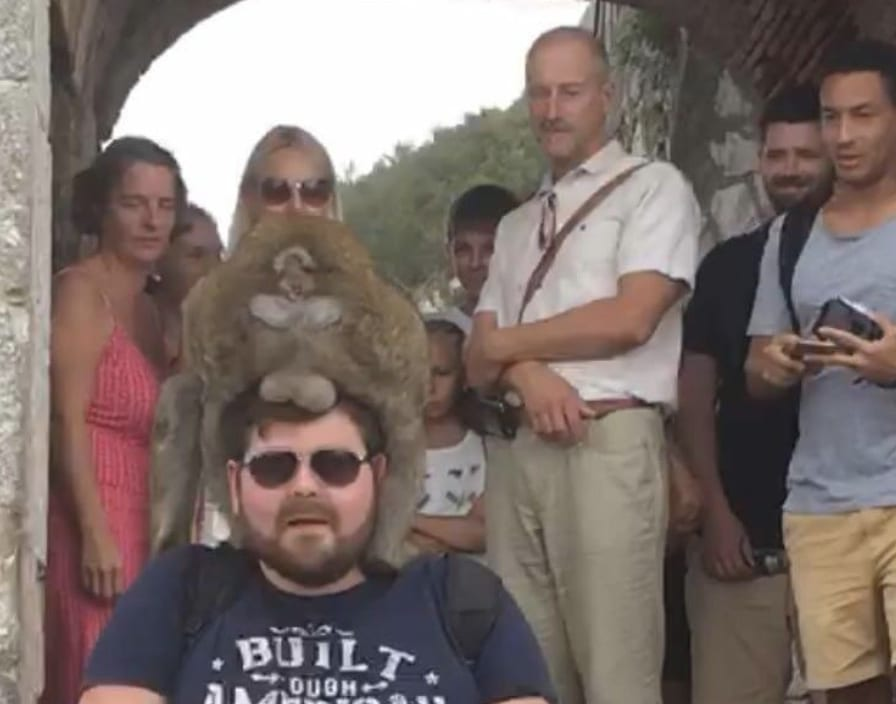 funny vacation photo of a man with a monkey on his head