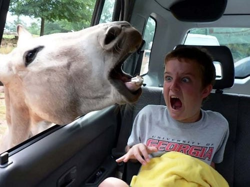 horse giving a boy a fright by putting it's head in through window
