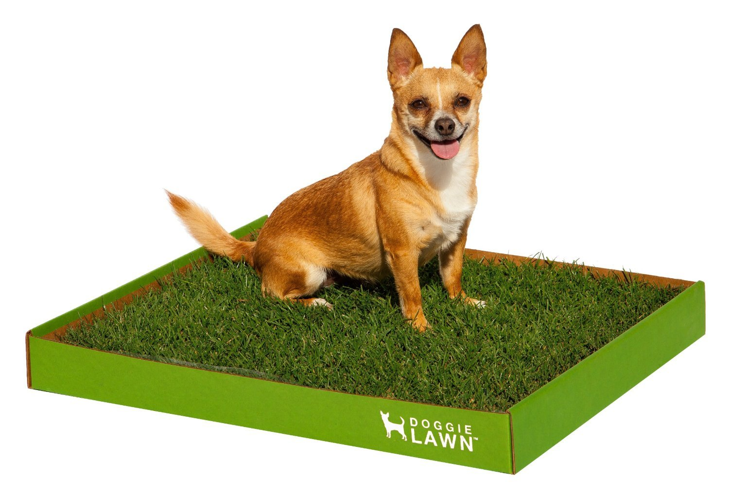 indoor fresh patch real grass dog potty (disposable)