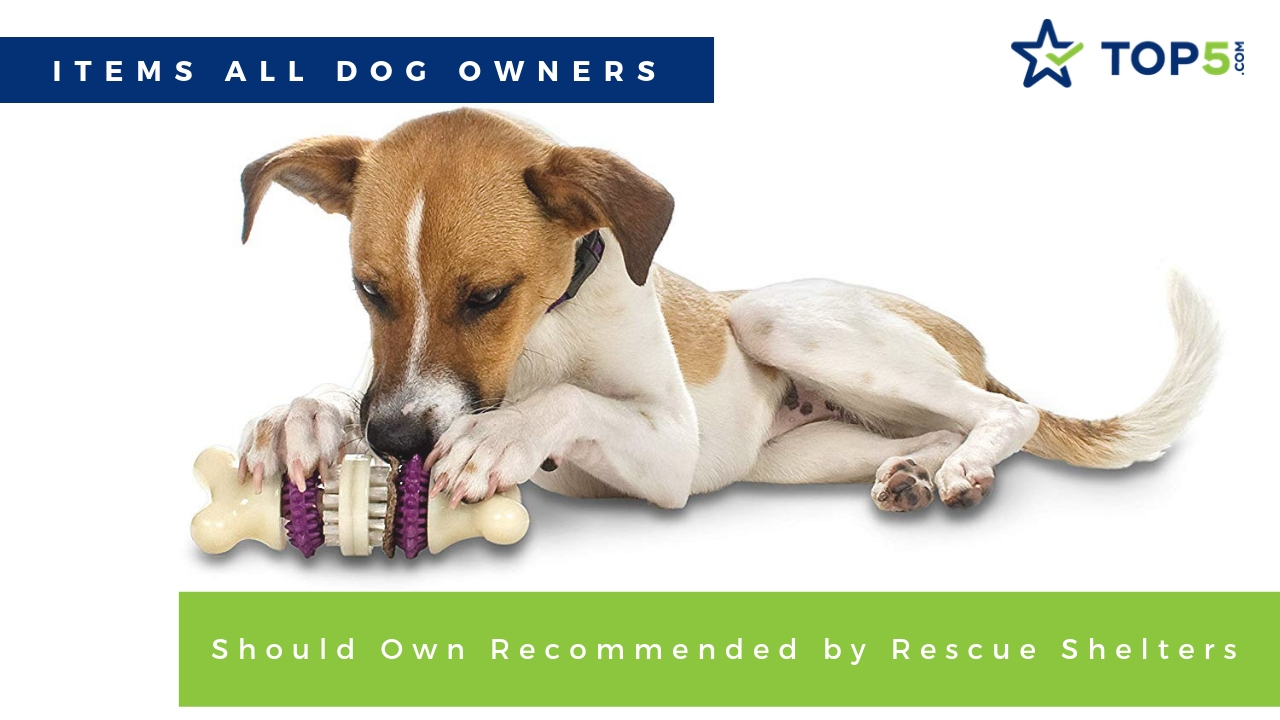 items all dog owners should own recommended by rescue shelters