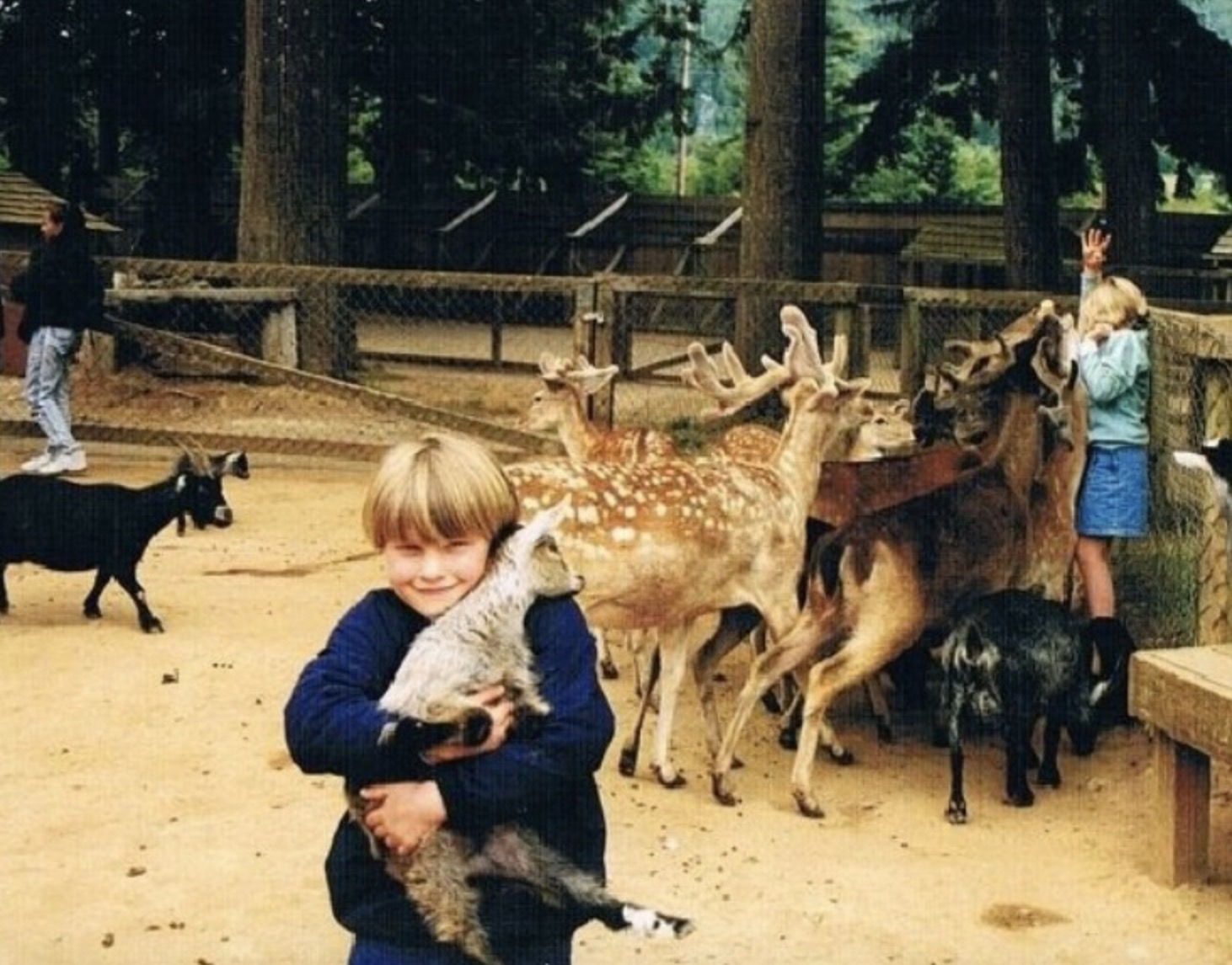 kid taking a cute phot with a deer while his sister is getting attacked by deer in the background