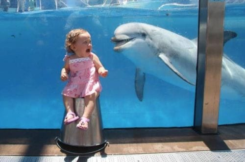 little girl scared of the dolphin