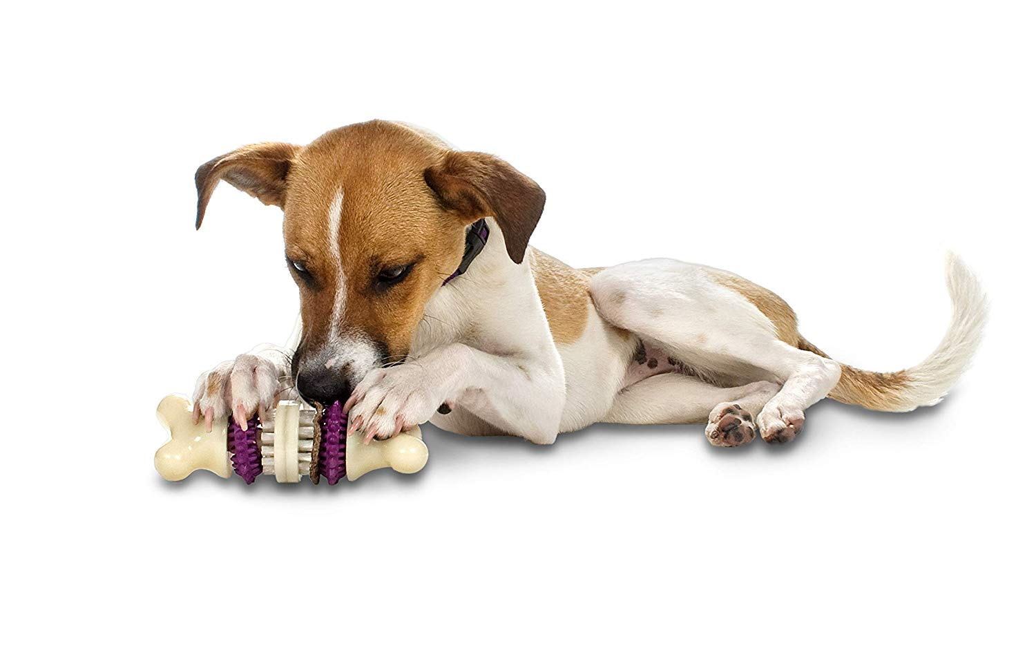 Items All Dog Owners Should Own as Recommended by Rescue Shelters