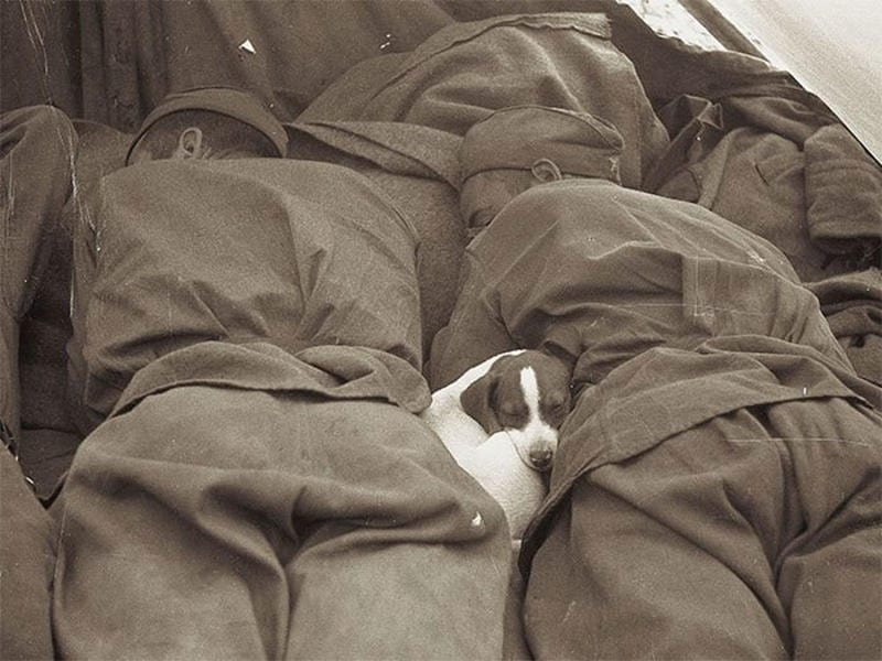 puppy and soldiers