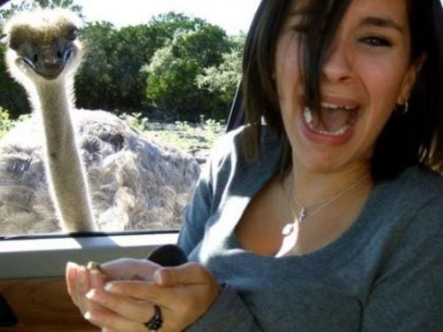 woman scared of feeding an emu