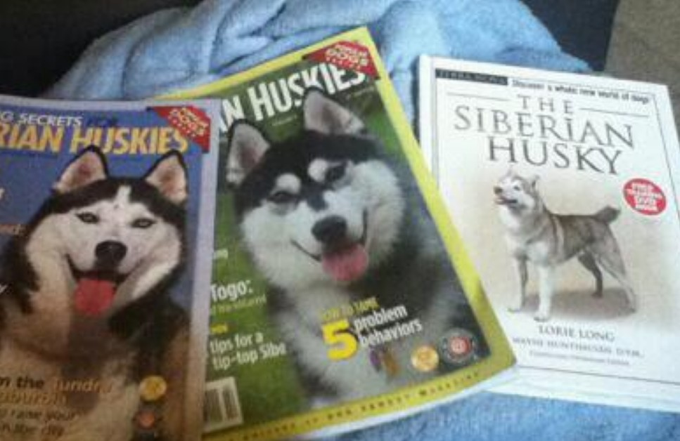researching the husky breed