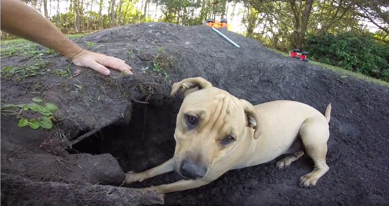 the dogs alerted couple to buried cans