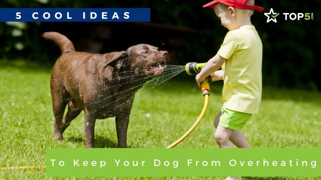 5 Cool Ideas to Keep Your Dog From Overheating