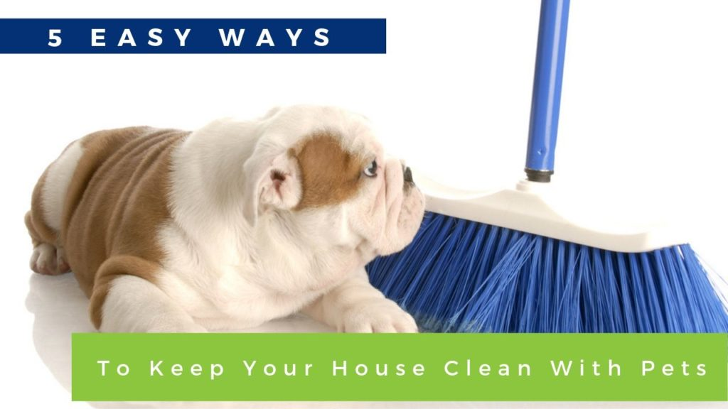 5 easy ways to keep your house clean with pets