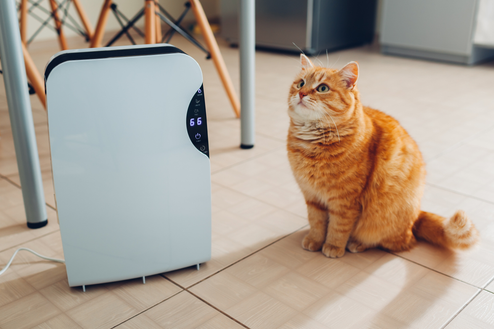 cat standing next to air purifier