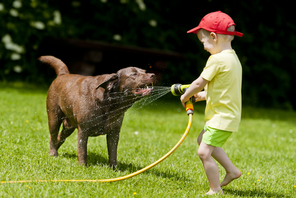5 Cool Ideas to Keep Your Dog From Overheating This Summer