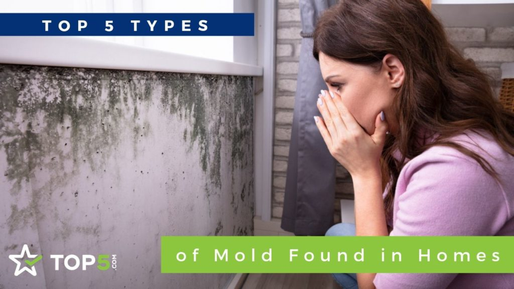 Top 5 Types of Mold Found in Homes