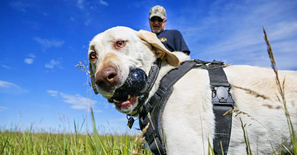 Family Finds Gold Nugget Worth $35K While Walking Dog Named 'Lucky'