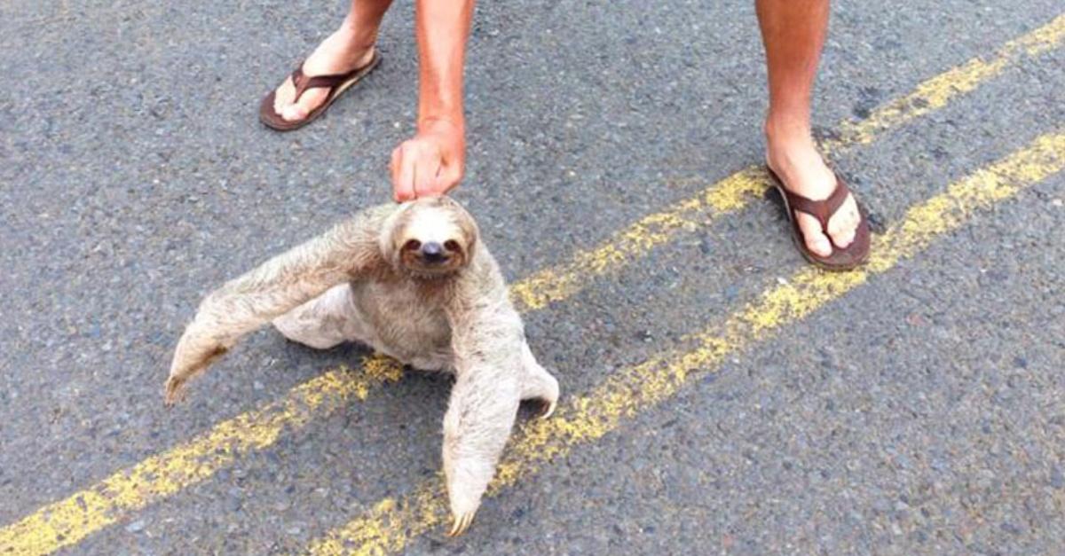 11 smiling sloth