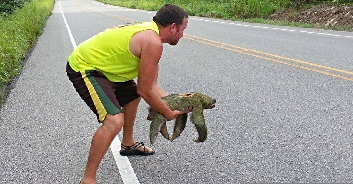 17 smiling man helps sloth cross the road