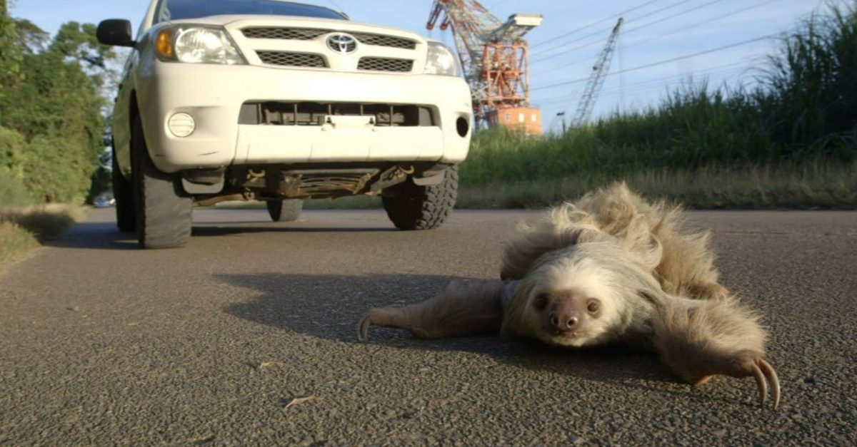 7 sloth in front of bg car
