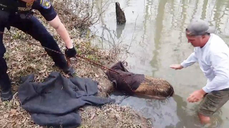 This Guy Tried To Rescue A Beaver, Got A Surprise Instead