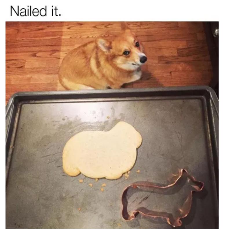 baking dog memes