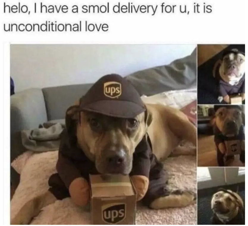 delivery from dog costume meme