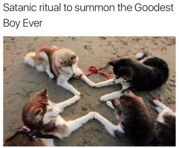dog memes ritual