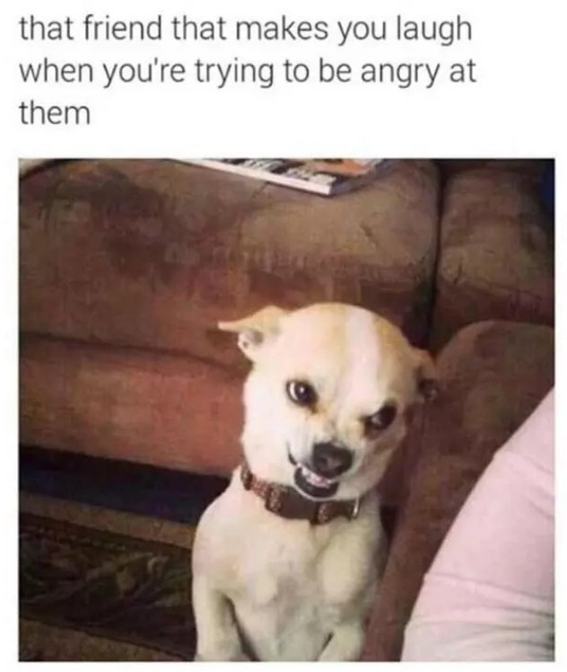dogs memes funny