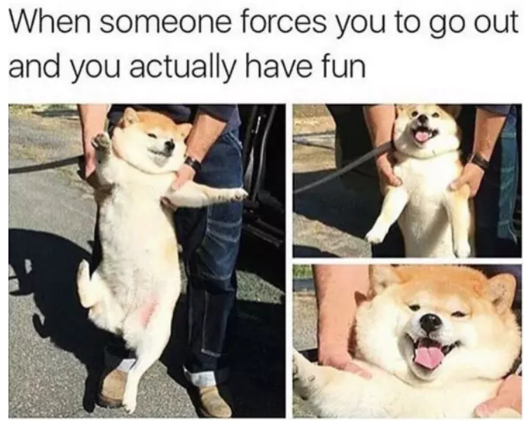 getting attention dogs meme