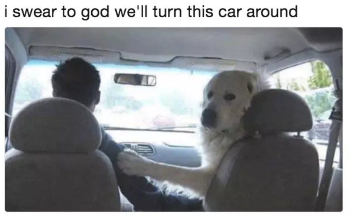 hilarious memes dogs