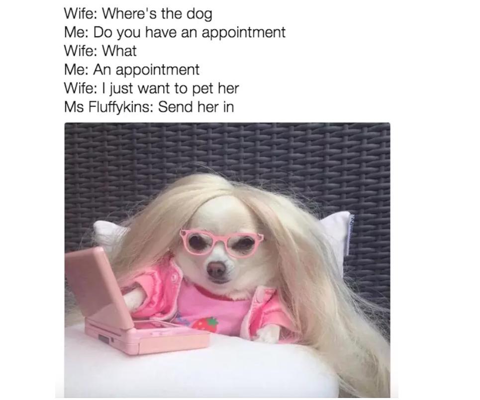 important dog