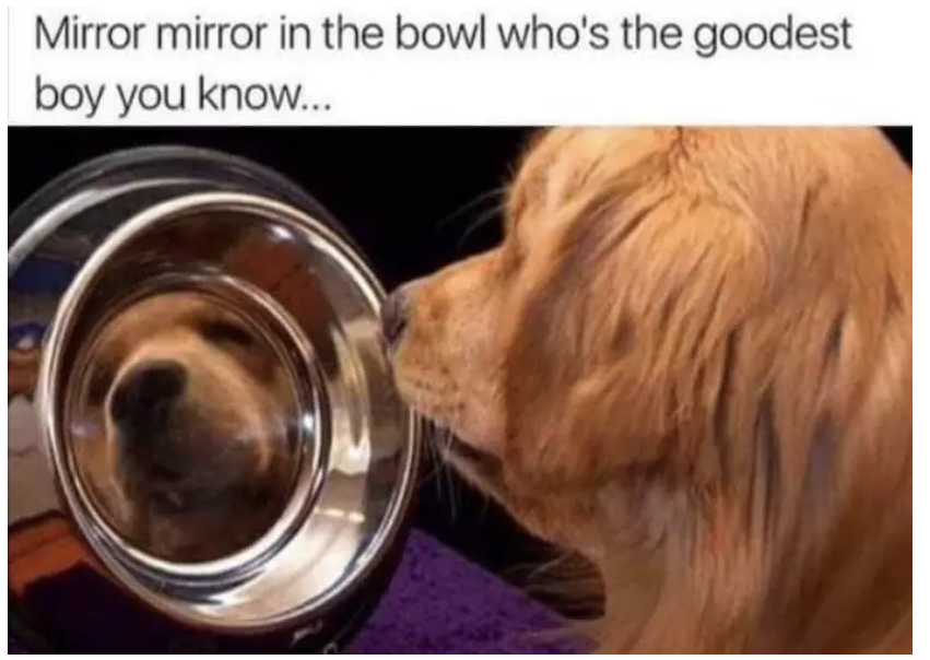 mirror in the bowl funny memes