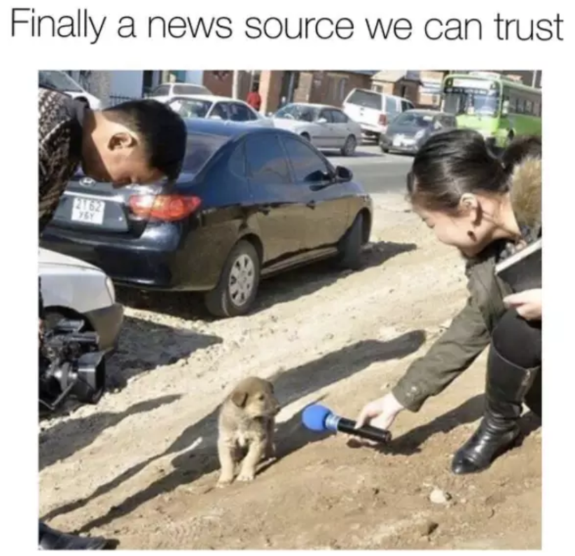 news dogs meme