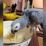 Naughty Parrot Goes On Shopping Spree While Owner Is Away