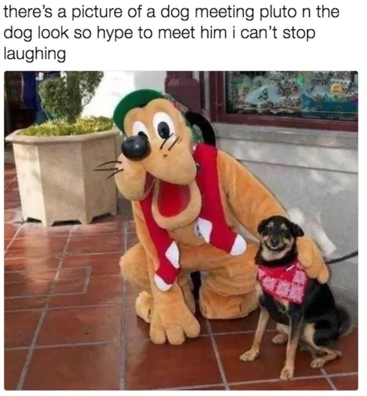pluto dog memes