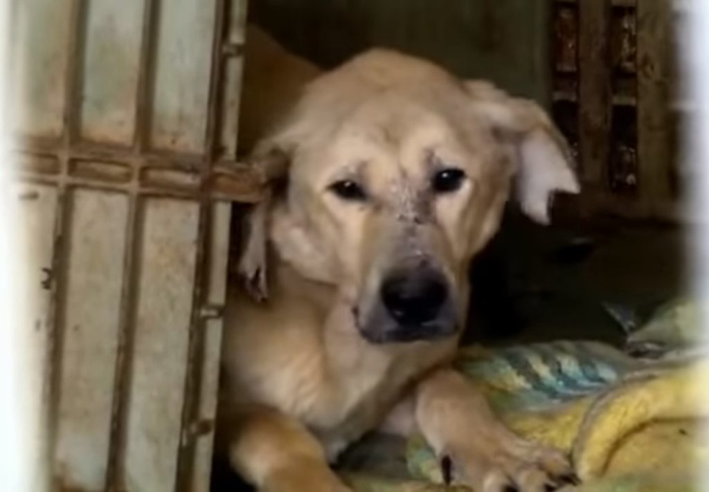 Unable To Settle For Single Rescue Dog, Woman Takes Shelter