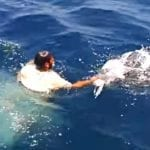 Kayaker Spots Turtle Approaching, Stops Cold When He Sees Mass Following Him