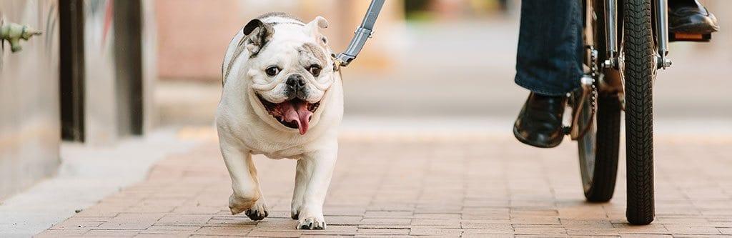 Pets Best Pet Insurance