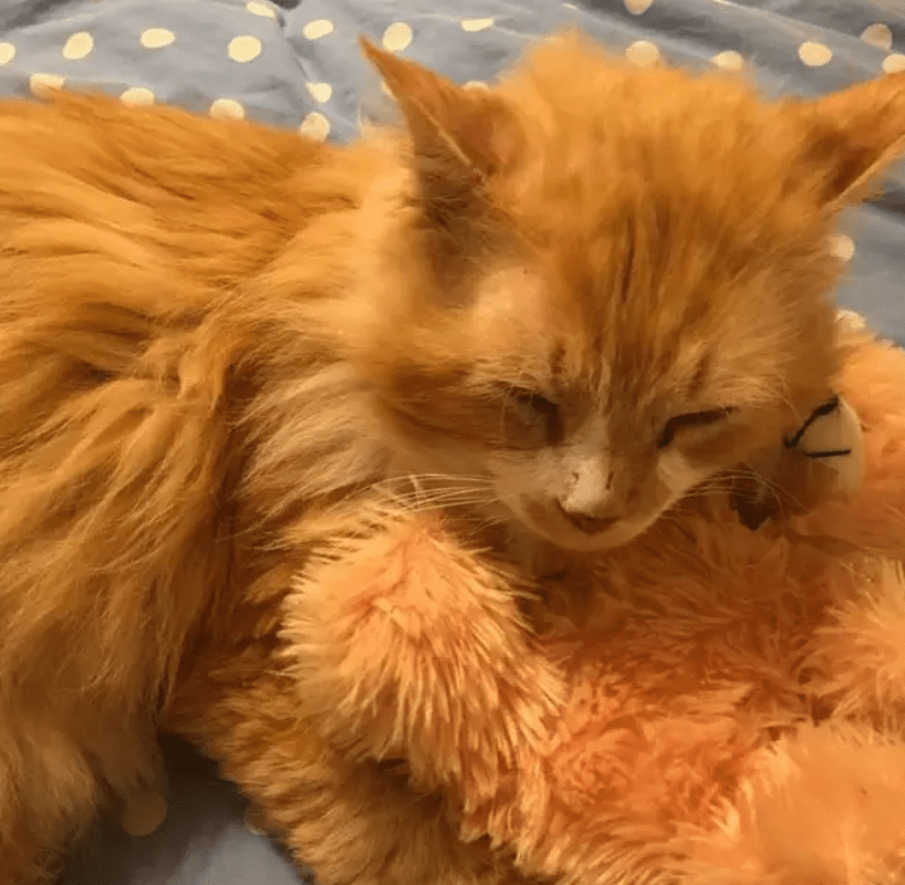 Cat Finds New Home After Walking Miles Back To Owners Who Rejected Him
