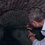 Mom Discovers Dark Secret Hidden Under Her Property