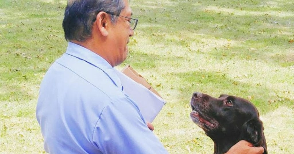 Chocolate Lab Falls In Love With Mailman, When Dad Realizes Why He Starts Filming