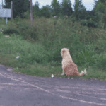 Passerby Sees Dog Sitting In Same Spot For Years, Amazed By His Reason Why