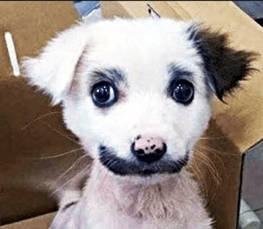 Man Realizes The Puppy He Brought Home Was Actually Something Else
