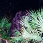 Man Thought He Found Bigfoot, It Was A More Ominous Creature