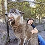 Shelter Saves Giant Dog, Then DNA Test Shows Why It's So Big