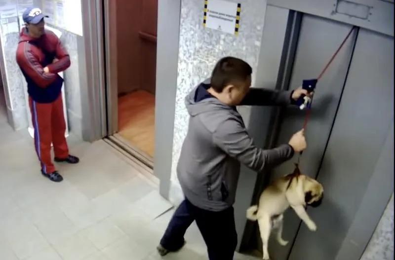 Yavru Köpeği Serbest Bırak