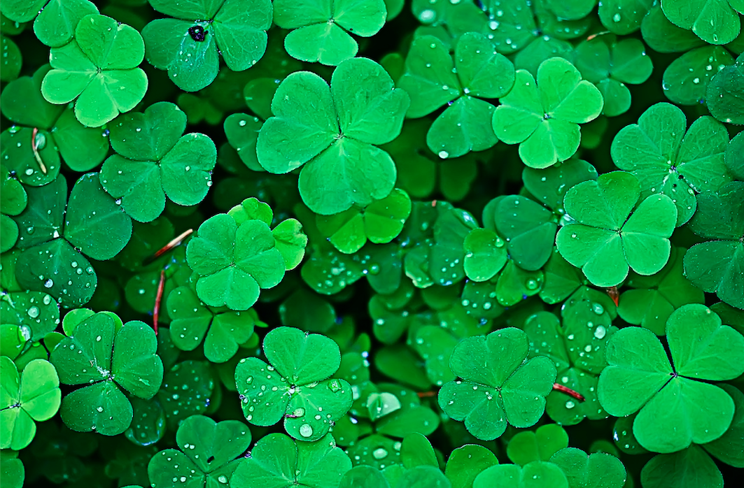 What did St. Patrick use a shamrock for?